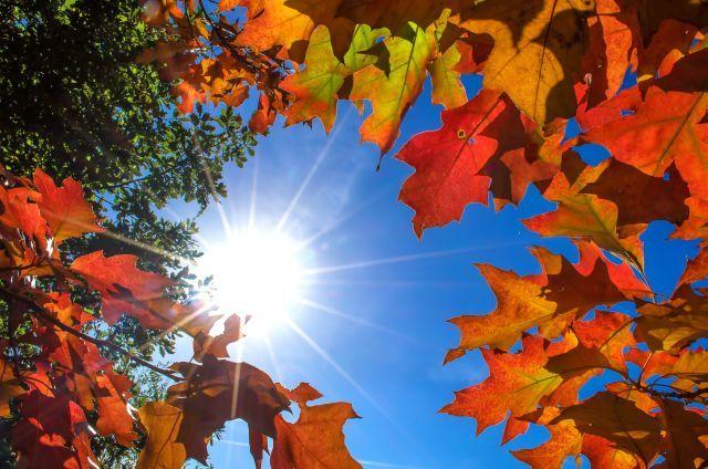 Menu jesień-zima